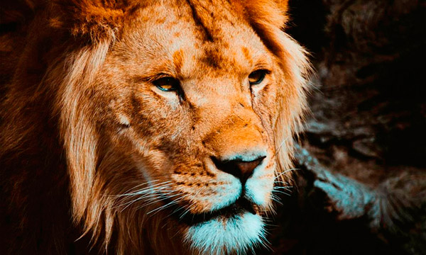 Заметки психолога: Самоопределение - выбор Льва